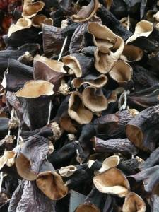 mushrooms-73771_1280